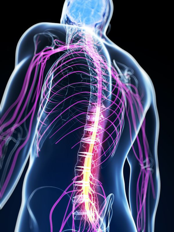 Nervous system chiropractic galashiels